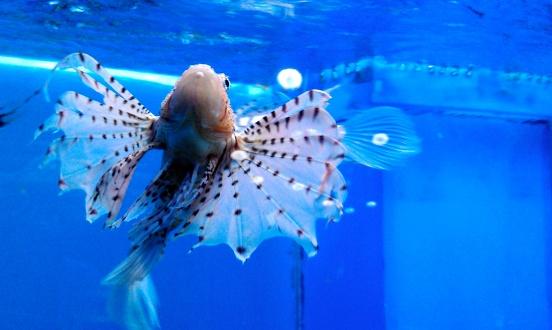 Aquarium du Quebec, Canada