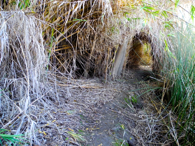 Trail system made by the homeless population outside San Diego, California